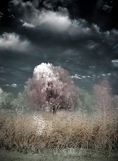 The Willow Tree by Annette Blattman