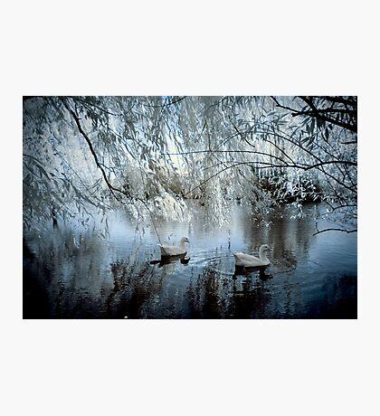 The Blue Pond Photographic Print
