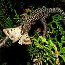 Gecko Kill by Macky