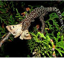 Gecko Kill Photographic Print