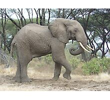 Elephant in funny pose Photographic Print
