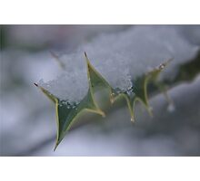 Snow Holly A Photographic Print