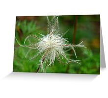 Dancing Like A Feathers In The Wind! -Feather type flower - Gore Gardens NZ Greeting Card