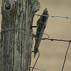 Fence by Nicki Kenyon