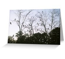 White Ibus Roost-2 Greeting Card