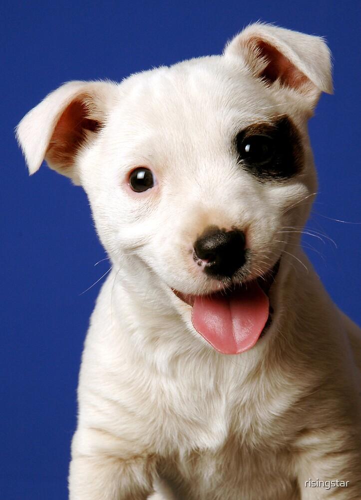 Puppy by risingstar