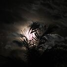 Moon lit palm  by jack01