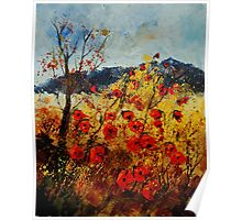 Red poppies in Provence Poster