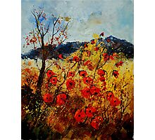 Red poppies in Provence Photographic Print