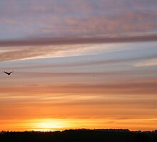 Bird flying home to roost in Autumn sunset by DonMique