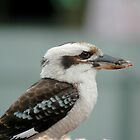 Kookaburra by risingstar