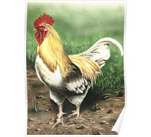 Farmyard Cockrel Poster