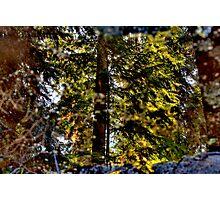 Natures Mirror Photographic Print
