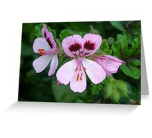 A Pink Jewell Greeting Card