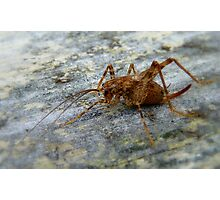 Jumping Jack - Weta - New Zealand Photographic Print