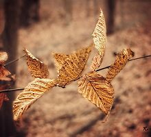 Winter Leaves by KatMagic Photography
