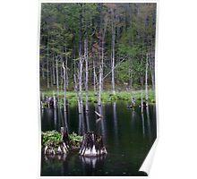 Beaver Pond Poster