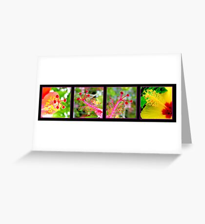 flores y colores Greeting Card