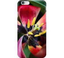 Anatomy of a Tulip - Red Petals, fine art garden photography iPhone Case/Skin