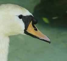 The Swan by Matthew Weaver