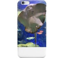 Happy Faced Stingray iPhone Case/Skin