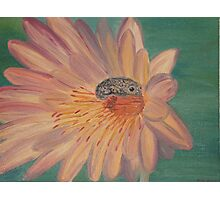 Frog on a flower Photographic Print