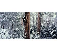Silent Forest Photographic Print