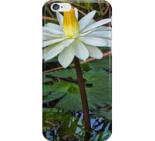 early morning water lily- Everglades iPhone Case/Skin