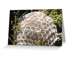 Empty Nest!! Greeting Card