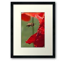 Anatomy of a Poppy: Into the Maw, fine art garden photography Framed Print