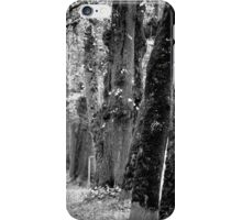 Trees on the Avenue iPhone Case/Skin