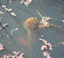 California Newts 3 by Chris Clarke