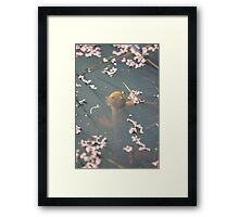 California Newts 3 Framed Print