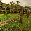 Fence line by Rosalie Dale