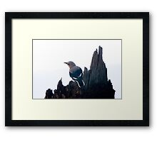 Clark's Nutcracker, Crater Lake Framed Print