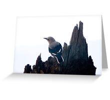 Clark's Nutcracker, Crater Lake Greeting Card