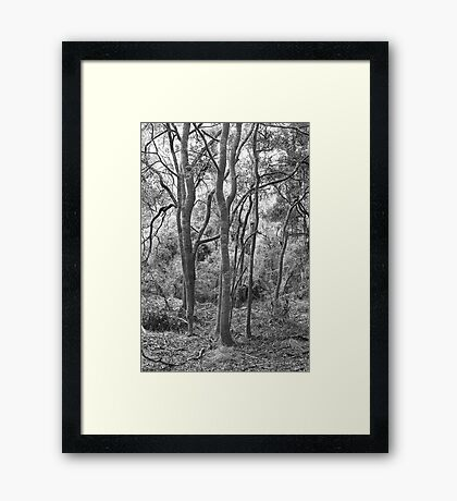 Blackwood 2 Framed Print
