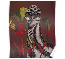 emu with kangaroo paw Poster