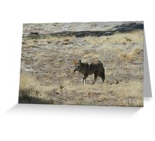Coyote 3 Greeting Card