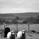Guardian Sheep by Tiffany Dryburgh