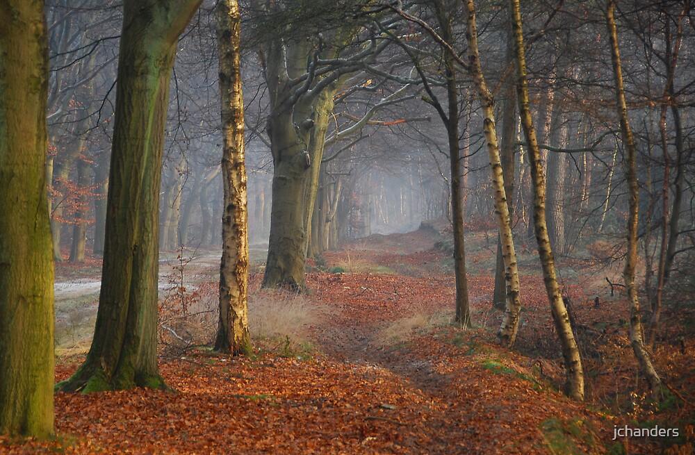 Strolling through dreamland by jchanders