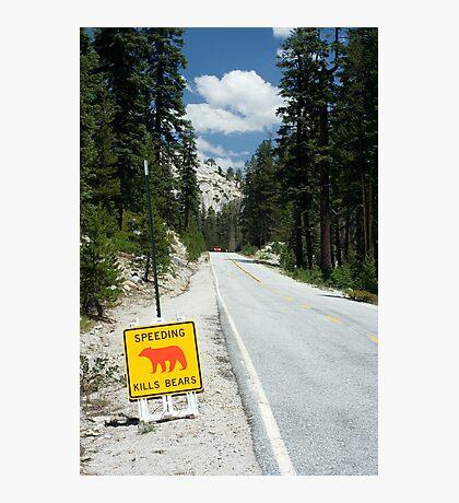 Speeding Kills Bears Photographic Print