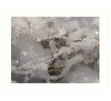 Whiteness of Snow!! Art Print