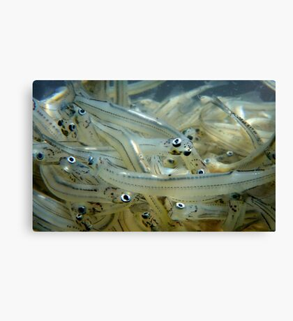 This Is The End My Friends! - Whitebait - NZ Canvas Print