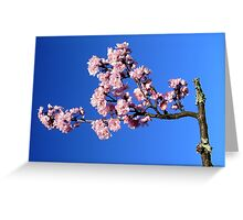 Pink Petals on Blue Greeting Card