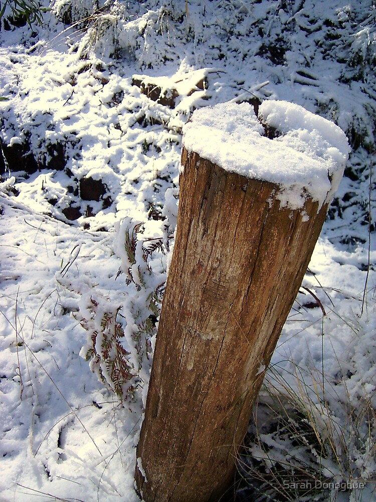 Snow Capped by Sarah Donoghue