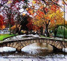 autumn colours by cynthiab