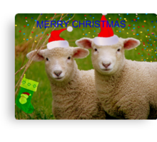 Merry Christmas - Lambs - NZ Canvas Print