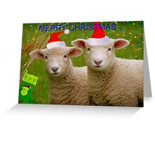Merry Christmas - Lambs - NZ Greeting Card