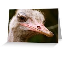 Who Said I Bury My Head In The Sand? - Ostrich - NZ Greeting Card